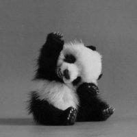 Милашка панда