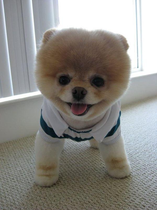 Самая очаровательная собака в мире