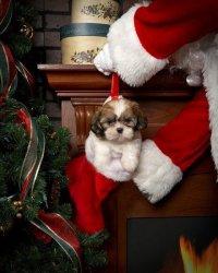Подарок от Санта-Клауса