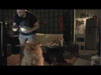 Кот смотрит ТВ