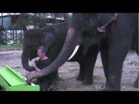 Слоны-пианисты