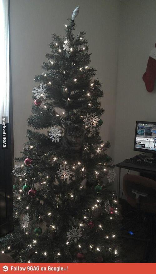 Что не так на этой елке?