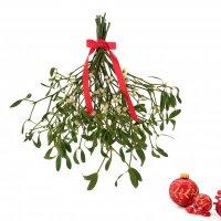 Растения-символы Рождества: омела