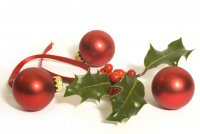 Растения-символы Рождества: падуб