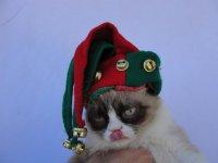 Сердитый кот встретил Рождество