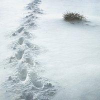 Святочные гадания: гадание на снегу