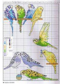 Схема вышивки «Волнистые попугайчики»