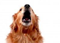 Святочные гадания: гадание по собачьему лаю