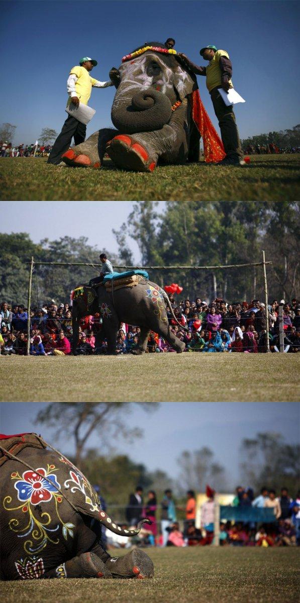 Конкурс красоты среди слонов в Непале