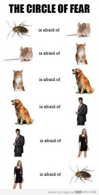 Круг страха