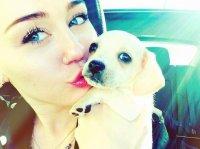 Новая собачка Майли Сайрус