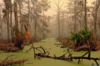 Самые жуткие места на планете: болото Манчак
