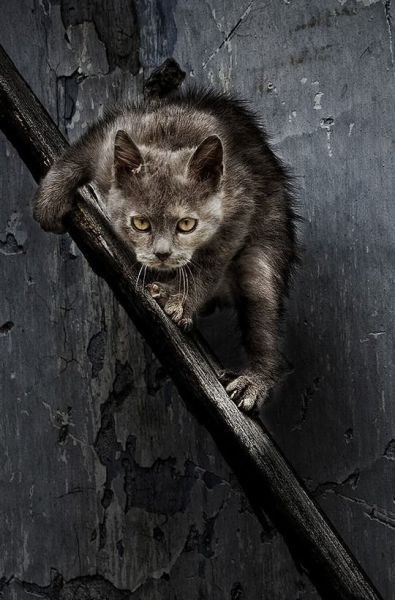 Бездомные животные: кто в ответе за тех, кого не приручили?