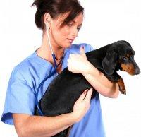 Что нужно знать перед походом к ветеринару