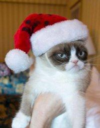 Сердитый кот в шапке Санты