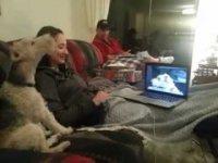 Собаки тоже могут общаться в Скайпе!