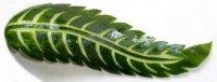 Искусство карвинга: листочек из огурца