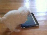 Щенок играет в игру на iPad