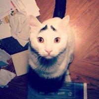 Новая звезда интернета: кот Сэм