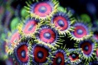Коралловый риф: макрофото