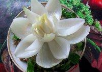 Искусство карвинга: цветок из лука для украшения блюд