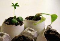 Яичная скорлупа как удобрение для цветов