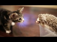 Как котенок встретил ежика