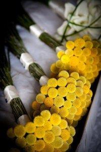 Букет невесты из краспедии шаровидной