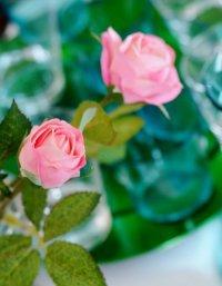 Лунный календарь на 2013 год: сажаем цветы