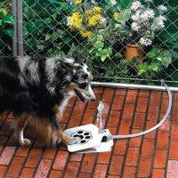 Поилка для ленивых собак