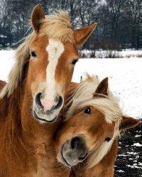 Лошадки улыбаются!
