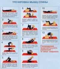 Тренируем мышцы спины