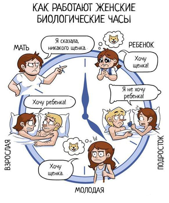 Как работают женские биологические часы