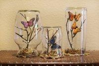 Композиции с бабочками в банке