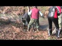 Как в Болгарии животных избавляют от бешенства