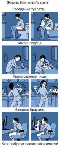 Жизнь без и с котэ