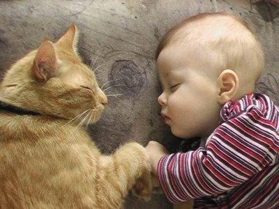 Дети и животные: есть ли угроза