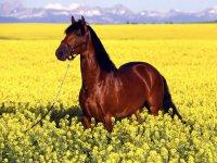 Редкие профессии в Европе: диетолог лошадей