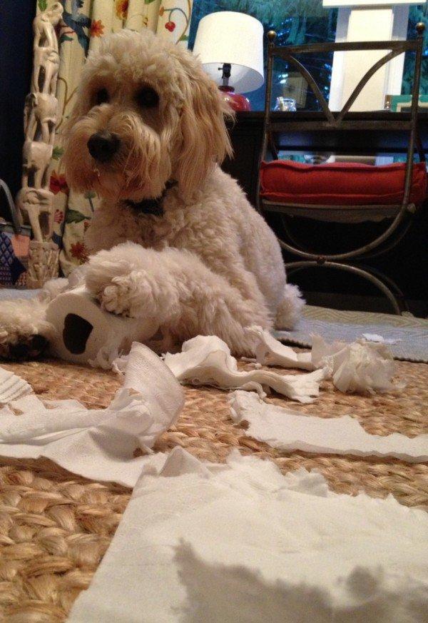 Почему собаки разносят дом на части, когда остаются одни дома?