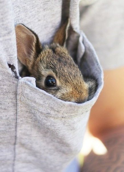 Кролик спрятался