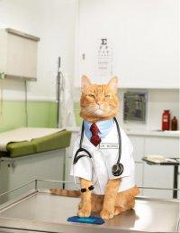 Кошкотерапия, или как вылечиться при помощи кошки