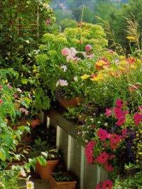 Переносим цветы на балкон: правила переезда