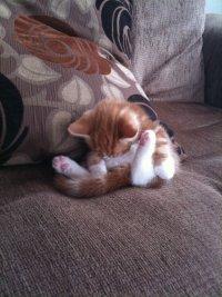 Кошачьи позы сна