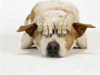 Почему собака боится всего, у чего есть колеса?