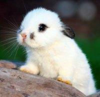 И снова маленький крольчонок
