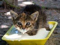 Правила кормления котов и кошек