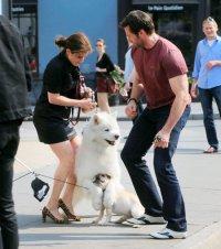 Хью Джекман и его собачья драма в Нью-Йорке