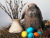 Пасхальные традиции: пасхальный кролик
