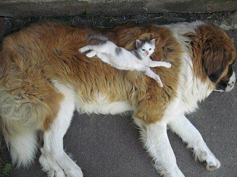 Для чего нужна большая собака в доме?