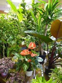 Как выбрать комнатное растение по знаку Зодиака